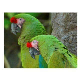 Grüne Papageien Postkarte