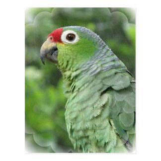 Grüne Papageien-Postkarte Postkarte