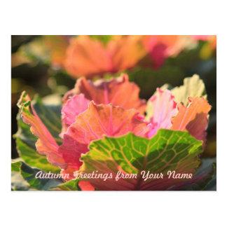 Grüne rosa Kohl-Blumen-Gemüsenachmittag Sun Postkarte