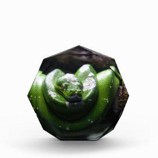 Grüne Schlange Auszeichnung