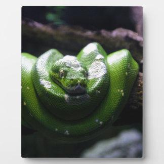 Grüne Schlange Fotoplatte