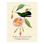 Grüne Throated Carib-Kolibri-Kunst-Postkarte