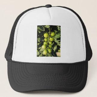 Grüne Tomaten, die an der Pflanze im Garten hängen Truckerkappe
