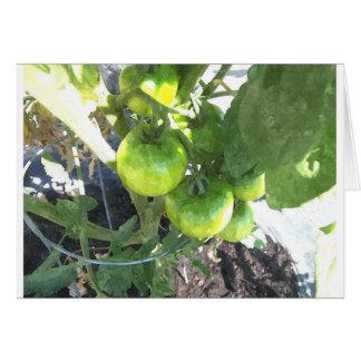 Grüne Tomaten Karte