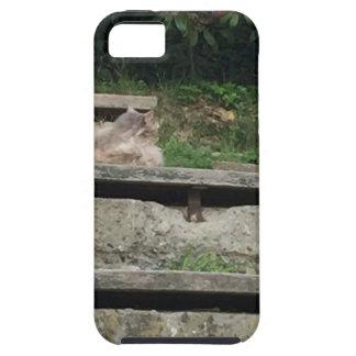 Grüne Treppe Schutzhülle Fürs iPhone 5