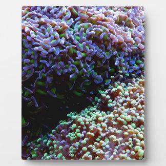 Grüne und lila anenomes fotoplatte