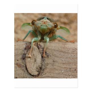 Grüne Zikade Postkarte