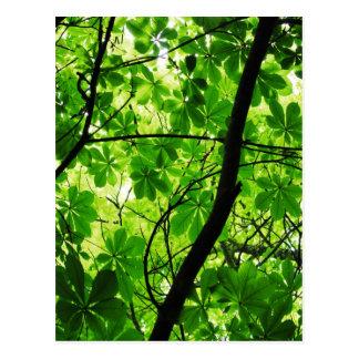 Grüner Blatt-Himmel Postkarte