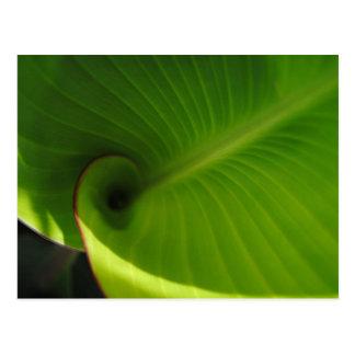 Grüner Blatt-Strudel Postkarte