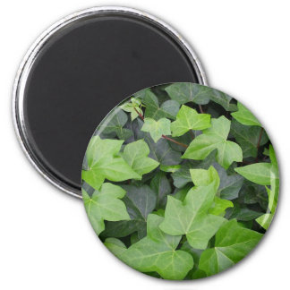 Grüner Efeu-botanischer Druck Runder Magnet 5,7 Cm