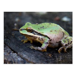 Grüner Frosch auf einem Baum-Stumpf Postkarte