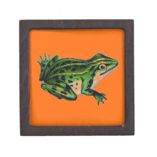 Grüner Frosch Kiste
