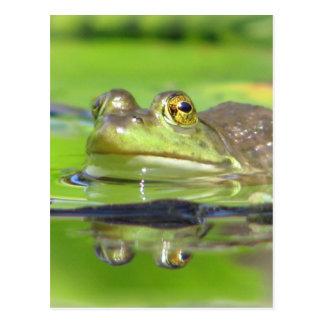 Grüner Frosch-Postkarte Postkarte