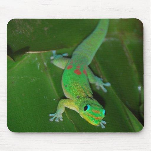 Grüner Gecko in Hawaii Mousepad