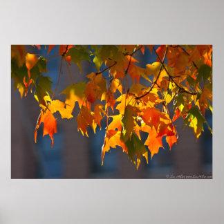 Grüner gelb-orangeer Herbst-Ahorn verlässt Plakat