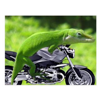 Grüner hawaiischer Gecko-Reiter Postkarte