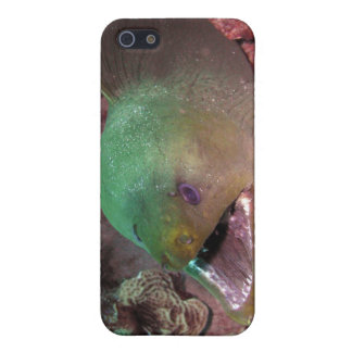 Grüner Moray-Aal iPhone Kasten Hülle Fürs iPhone 5