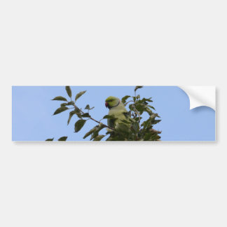 Grüner Parakeet Autoaufkleber