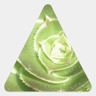 Grüner Succulent Dreieckiger Aufkleber