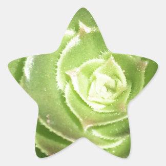 Grüner Succulent Stern-Aufkleber