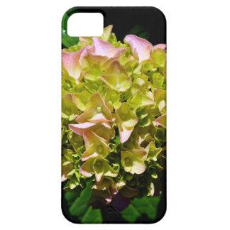 Grüner und rosa Hydrangea Schutzhülle Fürs iPhone 5