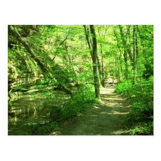Grüner Wald Postkarte