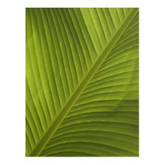Grünes Bananen-Blatt-Farbnahaufnahme-Detail-Foto 2 Postkarte