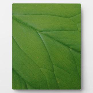 Grünes Blatt Fotoplatte
