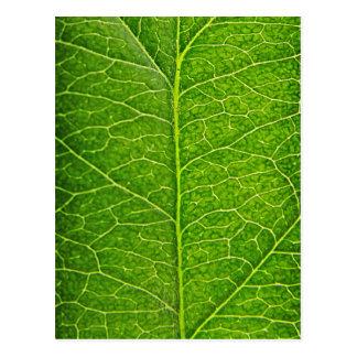 grünes Blatt Postkarte