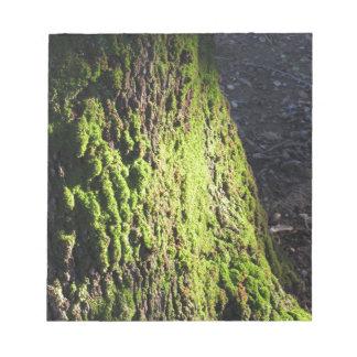 Grünes Moos ausführlich Natur des Mooses bedeckte Notizblock