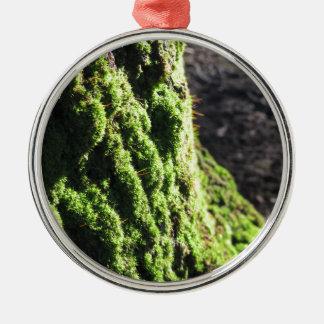 Grünes Moos ausführlich Natur des Mooses bedeckte Rundes Silberfarbenes Ornament