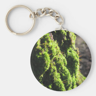 Grünes Moos ausführlich Natur des Mooses bedeckte Schlüsselanhänger