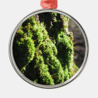 Grünes Moos ausführlich Natur des Mooses bedeckte Silbernes Ornament