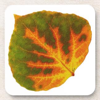 Grünes orange u. gelbes Aspen-Blatt #1 Getränkeuntersetzer