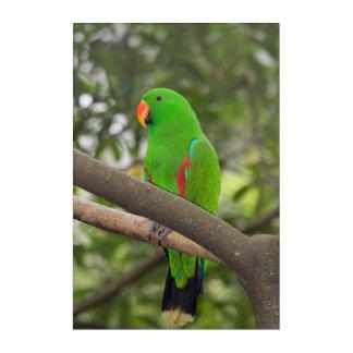 Grünes Papageien-Porträt Acryldruck