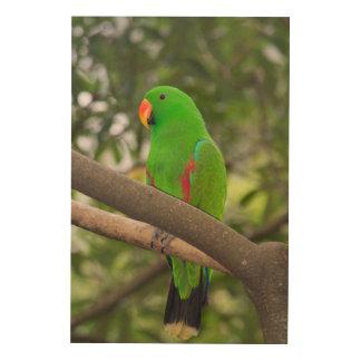 Grünes Papageien-Porträt Holzwanddeko