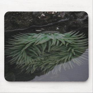 Grünes Seeanemone Mousepad