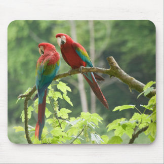 Grünflügelige Macaws Mousepad