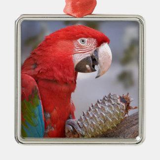 Grünflügeliger Macaw mit Kiefernkegel Silbernes Ornament