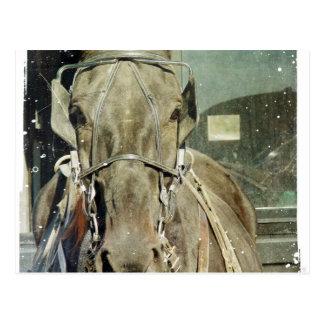 Grunge-amisches Buggy-Pferd Postkarte