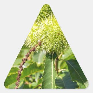 Grünhülsen und Blätter des Baums der süßen Dreieckiger Aufkleber