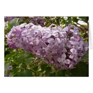 Gruppe der Flieder blüht lila Frühlings-Blumen Karte