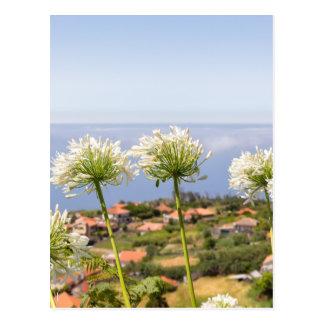 Gruppe des weißen Agapanthus nahe Dorf und Meer Postkarte