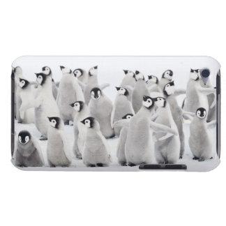 Gruppe Kaiser-Pinguine (Aptenodytes forsteri) iPod Case-Mate Hüllen