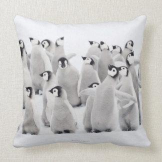 Gruppe Kaiser-Pinguine Aptenodytes forsteri Kissen