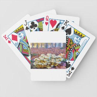 Gruppe Pilze im Fallbuchenwald Bicycle Spielkarten