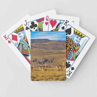 Gruppe Vicunjas an der Patagonian Landschaft Bicycle Spielkarten