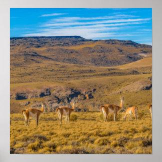 Gruppe Vicunjas an der Patagonian Landschaft Poster