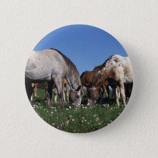 Gruppe weiden lassende Appaloosa-Pferde Runder Button 5,7 Cm