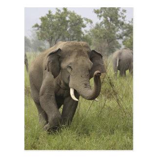 Gruß des indischen/asiatischen Elefanten, Corbett Postkarte